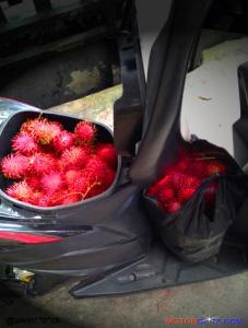 bagasi motor isi buah rambutan