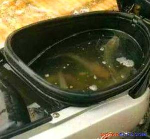 bagasi motor isi ikan