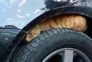 kucing naik motor (11)