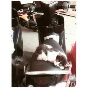 kucing naik motor (12)