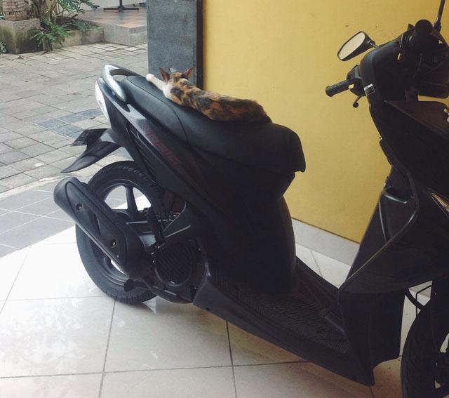 Binatang Pun Butuh Kehangatan Motorblitz