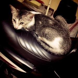 kucing naik motor (15)