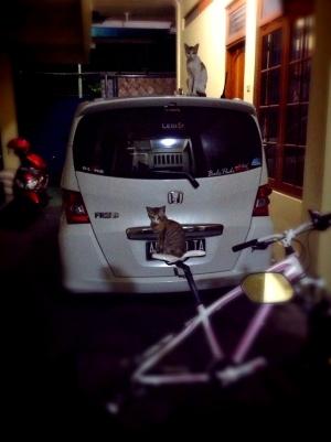 kucing naik motor (16)