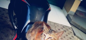 kucing naik motor (17)