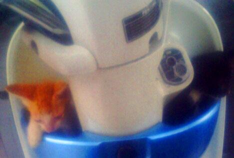 kucing naik motor (18)