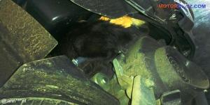 kucing numpang di motor (2b)