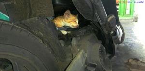kucing numpang di motor (2c)