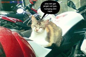 kucing numpang motor2