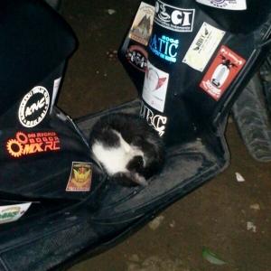 kucing numpang motor3